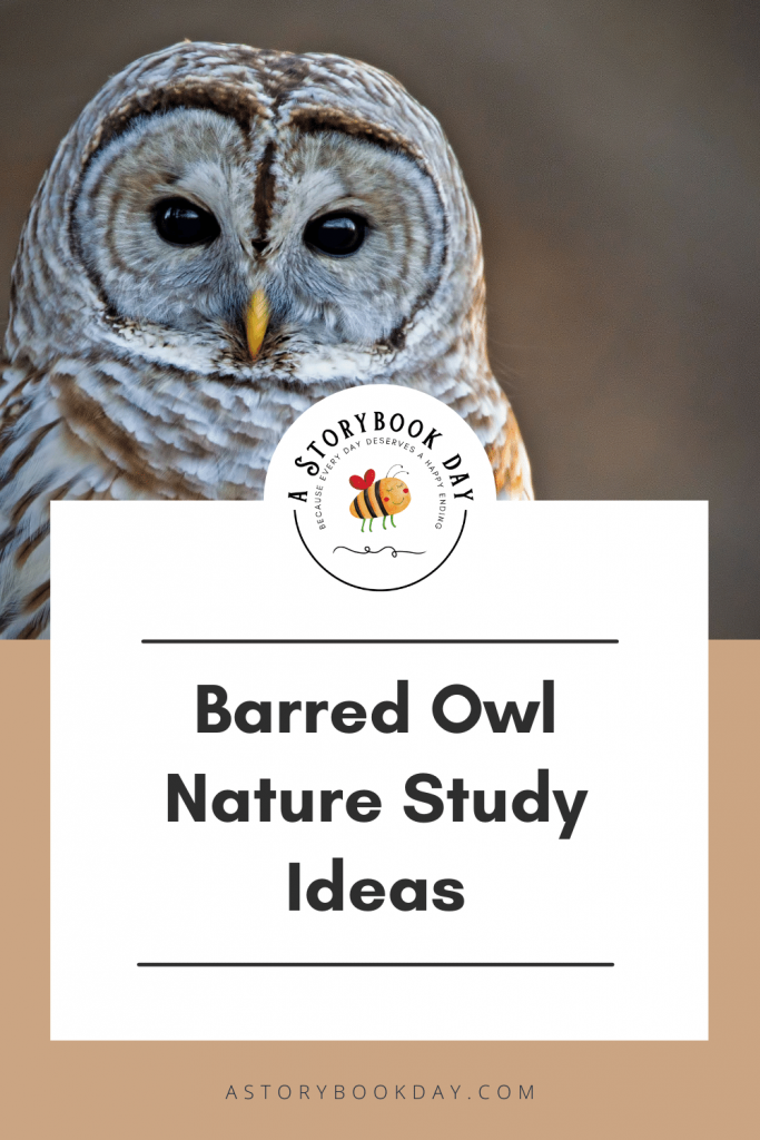 Barred Owl Nature Study | Homeschool @ aStorybookDay.com
